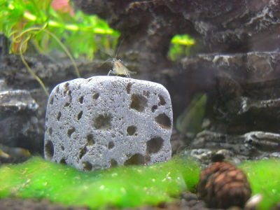 Eco Bricks dans l'aquarium
